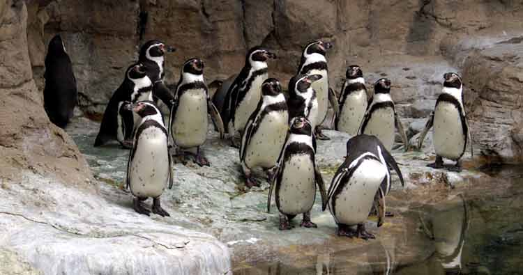 produce quality for Google - Google Penguin - content marketing - quality content